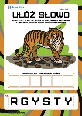 """Ułóż słowo """"tygrys"""": poziom średni"""