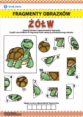 nr 4 Poszukujemy fragmentów obrazków: żółw