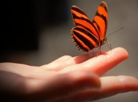 Czego możemy się nauczyć od motyla