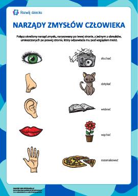 Narządy zmysłów człowieka