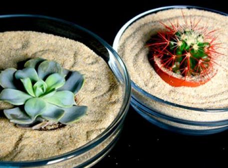 Harmonia i komfort z miniaturowym ogrodem Zen