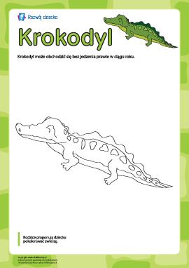 """Kolorowanka """"Krokodyl"""""""