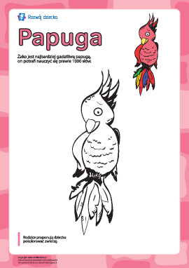"Kolorowanka ""Papuga"""