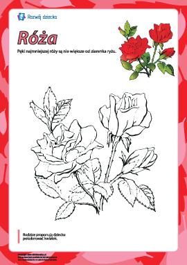 """Kolorowanka """"Róża"""""""