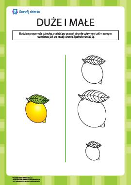 Które cytryny są jednakowe w rozmiarze?