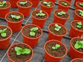 Eksperyment z hodowania roślin