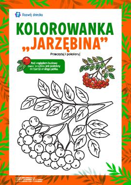 """Kolorowanka """"Jarzębina"""""""