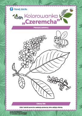 "Kolorowanka ""Czeremcha"""
